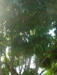 Pili Cam Sur